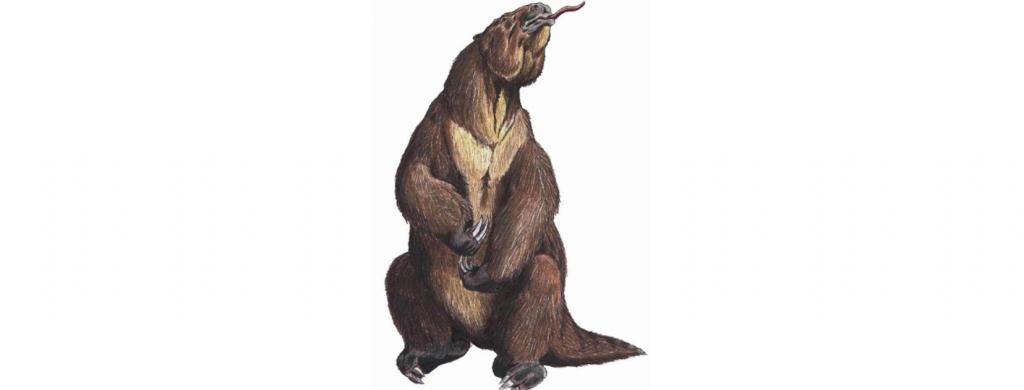 News & prioslav.ru: Исчезнувшие животные древнего мира - Гигантские сумчатые в Австралии