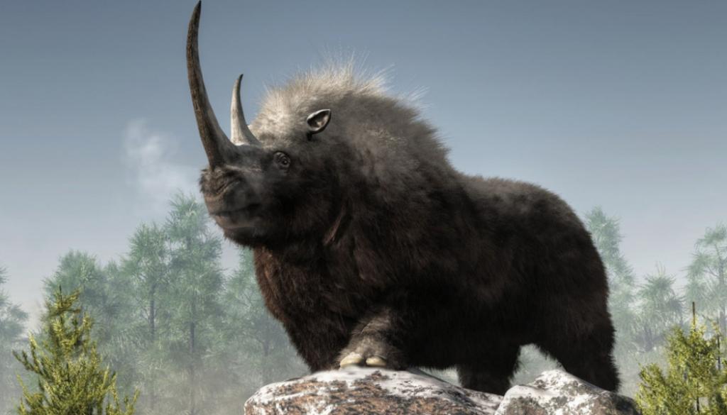 News & prioslav.ru: Исчезнувшие животные древнего мира - Шерстистый носорог