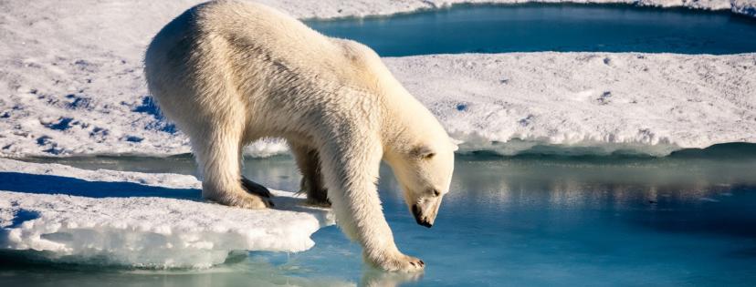 News & prioslav.ru: 18 опасных климатических изменений на Земле