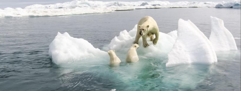 News & prioslav.ru: Исчезновение жизни на Земле из-за выбросов углекислого газа -1