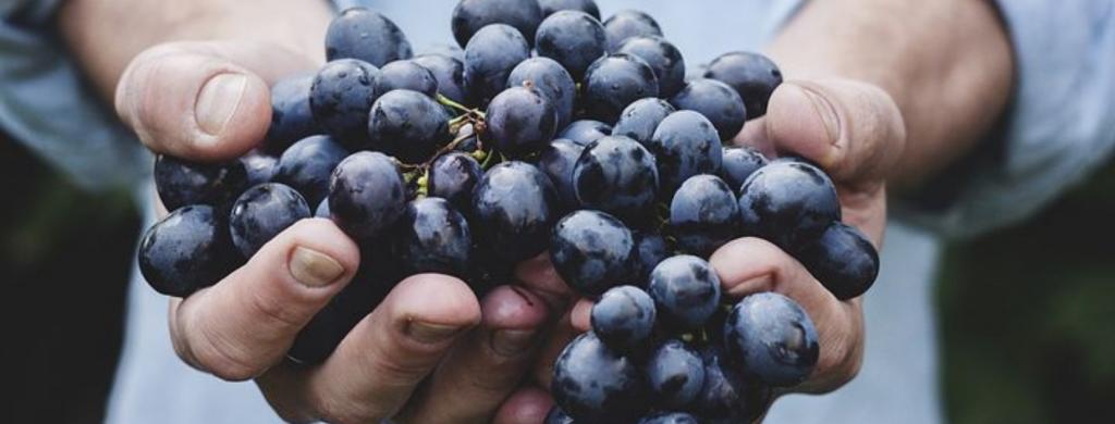 Виноград или, точнее, виноградная кожура, когда она химически разложена и ферментирована естественным путем, растаивает лед быстрее, чем соленый или свекольный сок