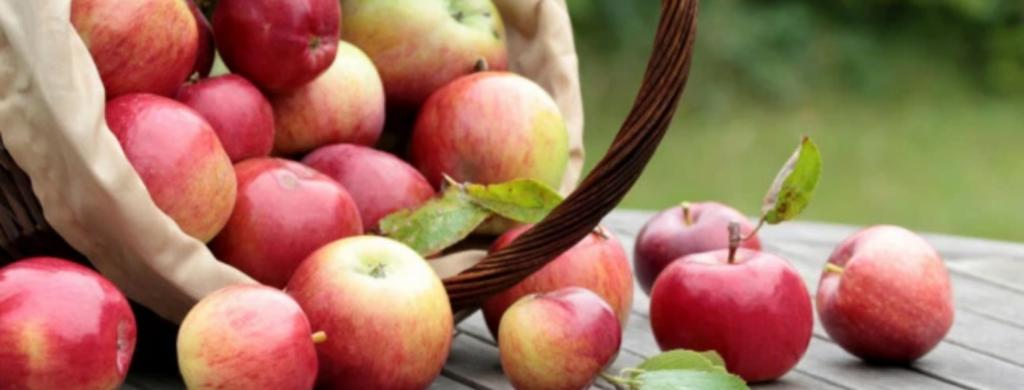 News & prioslav.ru: Лучшие продукты для похудения. Чем они полезны, сколько содержат калорий и клетчатки?