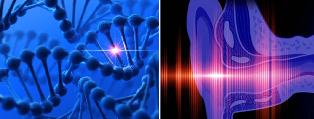 News @ prioslav.ru: ДНК клетки при курении меняются / Внутреннее ухо не получает достаточно кислорода