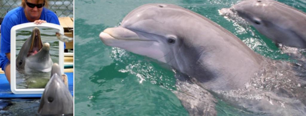 News @ prioslav.ru: 15 схожих признаков между людьми и дельфинами